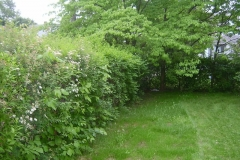 Trim Overgrown Hedges