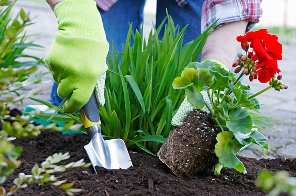 The Gardening Resolutions You Need to Make for 2020