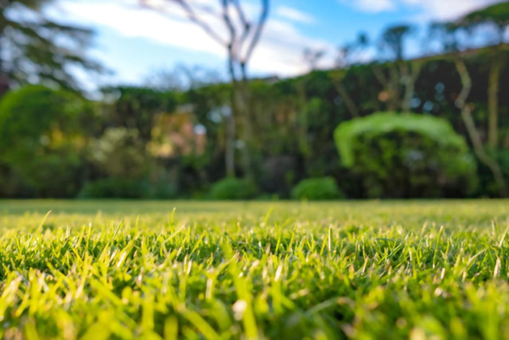 Things to Consider when Choosing a Lawn Care Company in Ohio