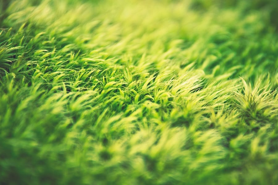 When is the Best Time to Aerate and Overseed Your Lawn in Ohio?